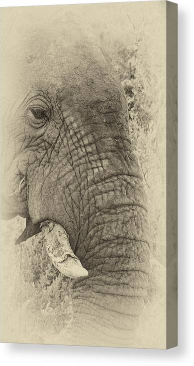 Old Canvas Print featuring the photograph The Old Elephant Bull by Douglas Barnard