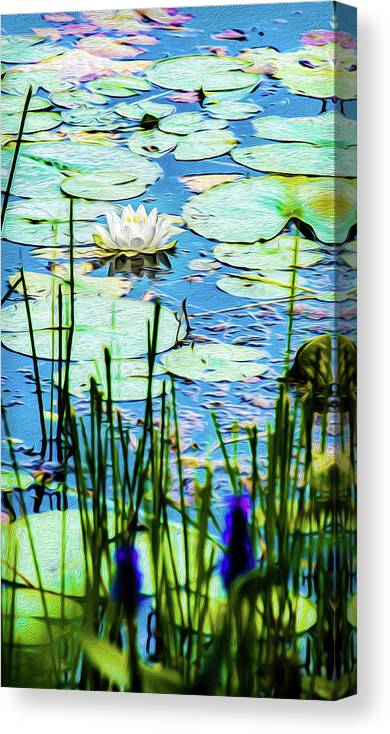 Nymphaea Odorata Canvas Print featuring the mixed media Painted North American White Water Lily by Onyonet Photo Studios