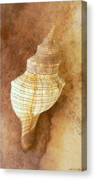 Still Life Canvas Print featuring the photograph Sounds Of The Sea by Holly Kempe