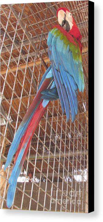Parrot Canvas Print featuring the photograph Parrot by Bozena Simeth