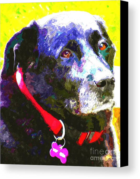 Colorful Old Dog Canvas Print featuring the photograph Colorful Old Dog by Barbara Griffin