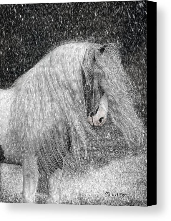 Gypsy Horses Canvas Print featuring the digital art Nor Easter by Fran J Scott