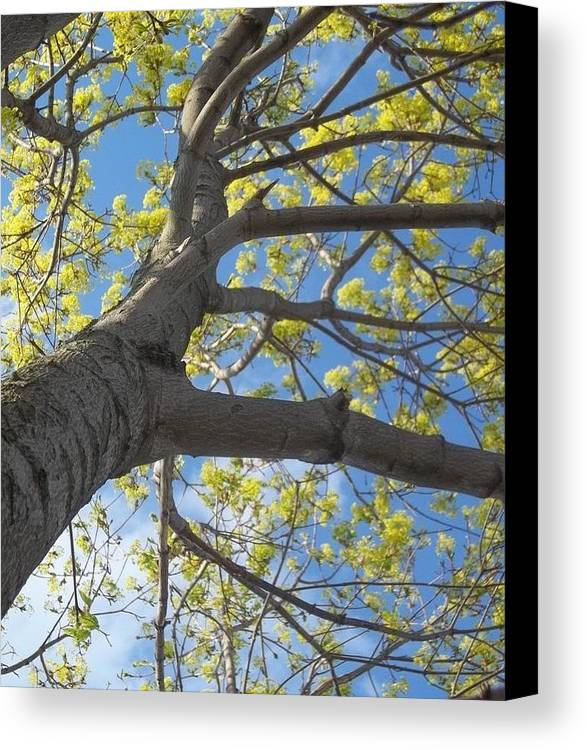 Tree Canvas Print featuring the photograph Reach For The Sky by Brianna Black