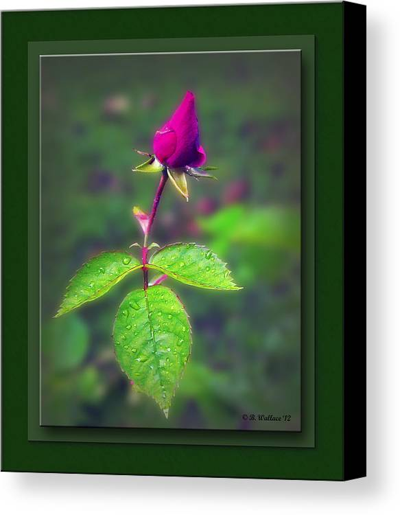2d Canvas Print featuring the photograph Rose Bud by Brian Wallace