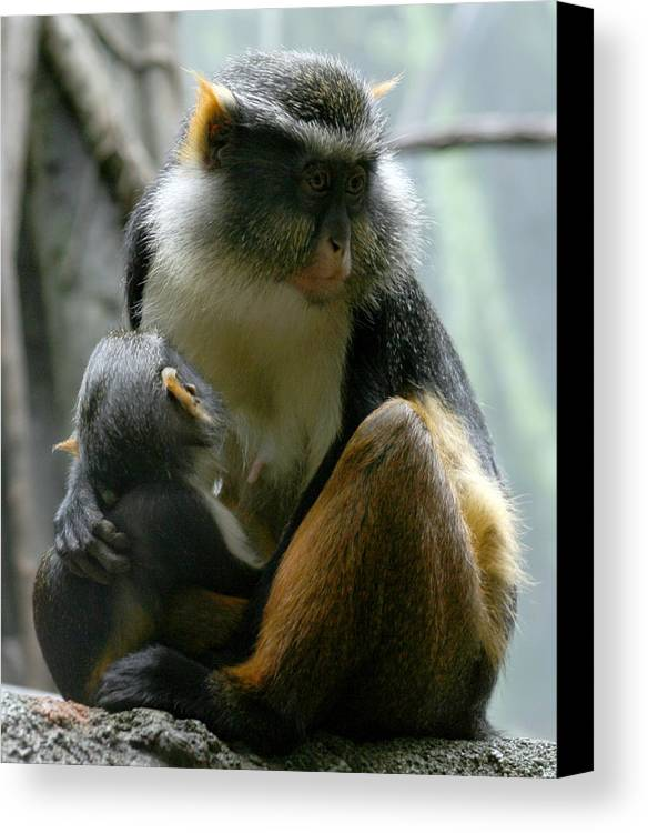 Monkey Canvas Print featuring the photograph Momma by Jason Hochman