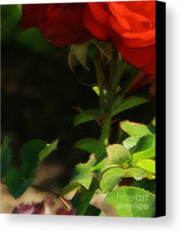 Rose Canvas Print featuring the photograph Red Rose by Linda Shafer