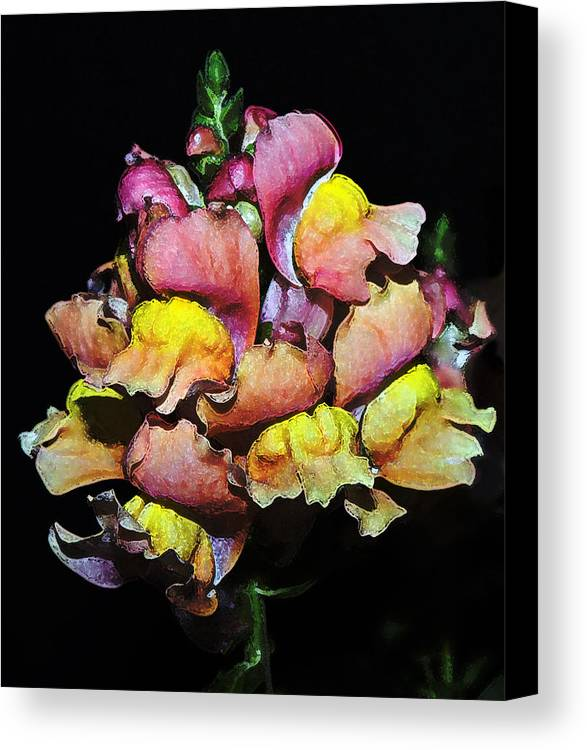 Snapdragon Canvas Print featuring the photograph Snapdragons by Al Mueller