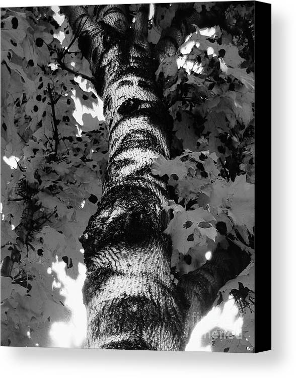 Tree Canvas Print featuring the photograph The Tree by Reb Frost