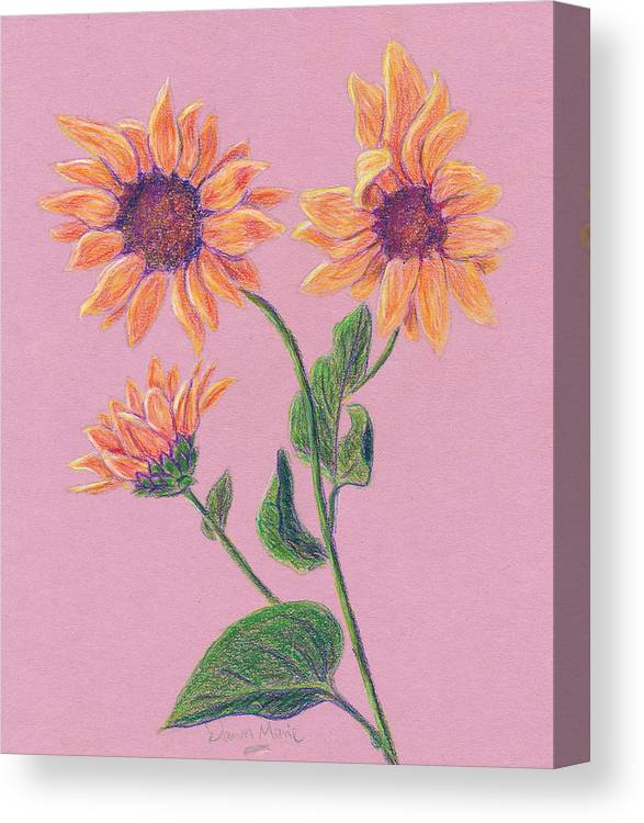 Flowers Canvas Print featuring the drawing Sun Flowers by Dawn Marie Black