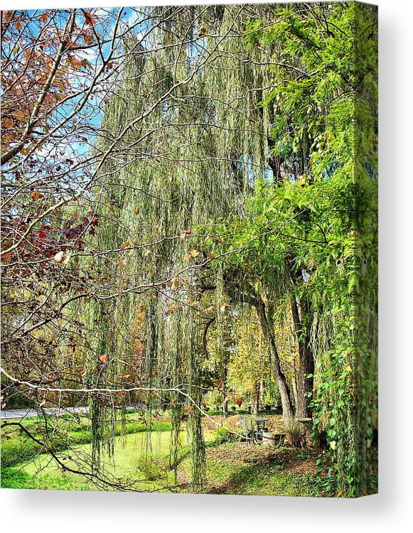 Nature Canvas Print featuring the photograph Weeping Willow by Judith Lawhon