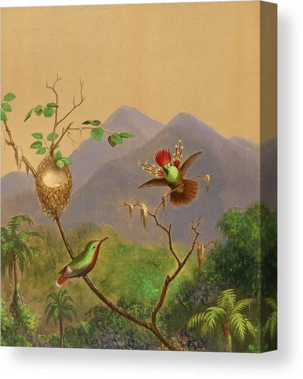 Martin Johnson Heade Canvas Print featuring the painting Brazilian Hummingbirds IIi by Martin Johnson Heade