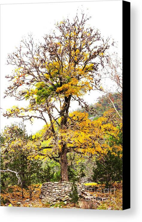 Autumn Canvas Print featuring the photograph Autumn Tree by Gary Richards