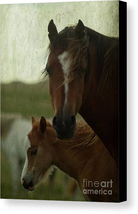 Horse Canvas Print featuring the photograph Horses by Angel Ciesniarska