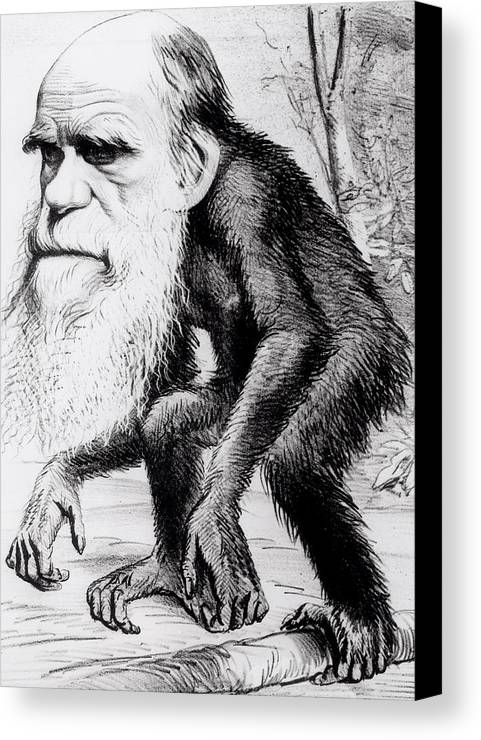 Evolutionary Canvas Print featuring the painting A Venerable Orang Outang by English School