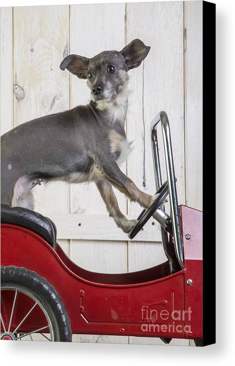 Car Canvas Print featuring the photograph Baby You Can Drive My Car by Edward Fielding