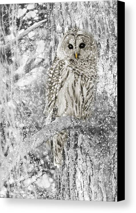 Owl Canvas Print featuring the photograph Barred Owl Snowy Day In The Forest by Jennie Marie Schell