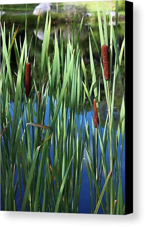 Photograph Canvas Print featuring the photograph Cattail Pond In Watercolor by Suzanne Gaff