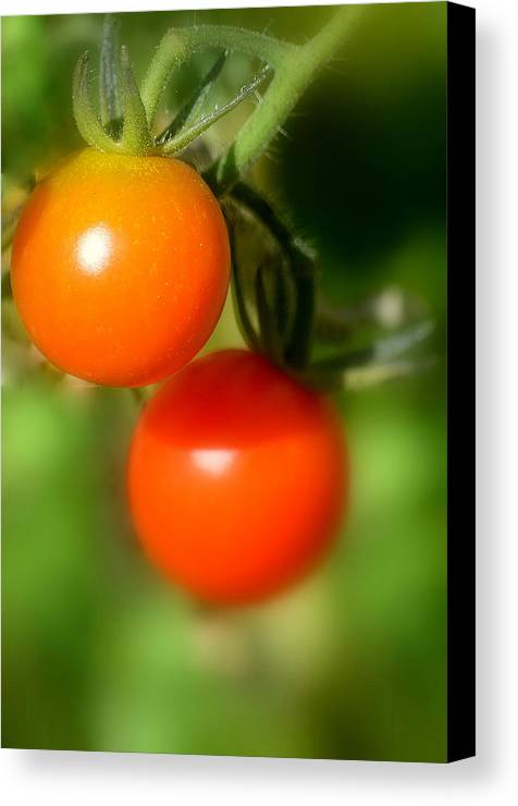 Art Canvas Print featuring the photograph Cherry Tomatoes II by Joan Han
