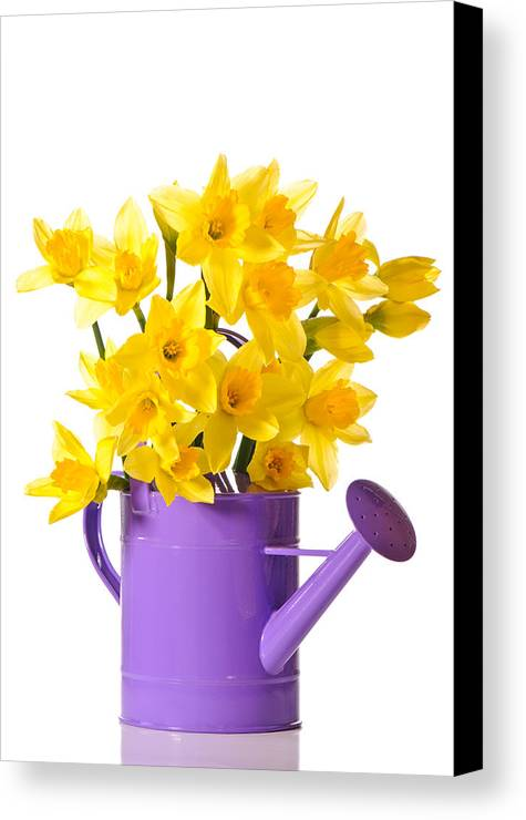 Daffodils Canvas Print featuring the photograph Daffodil Display by Amanda Elwell