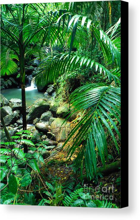 Puerto Rico Canvas Print featuring the photograph El Yunque Palm Trees And Waterfall by Thomas R Fletcher