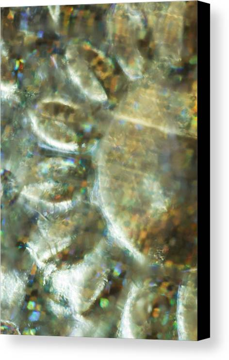 Flower Canvas Print featuring the photograph Flower Abstract by Angie Vogel