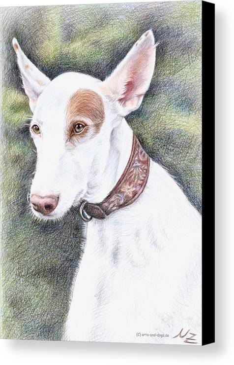 Dog Canvas Print featuring the drawing Podenco Ibicenco by Nicole Zeug