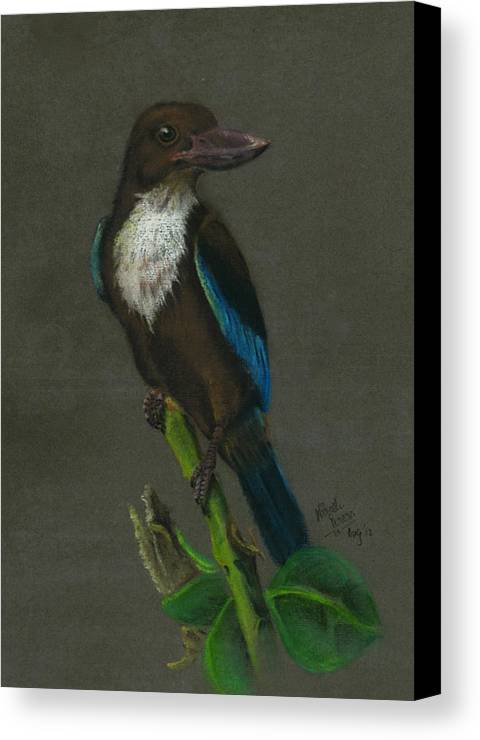 Kingfisher Canvas Print featuring the painting White-throated Kingfisher by Nirosh Perera