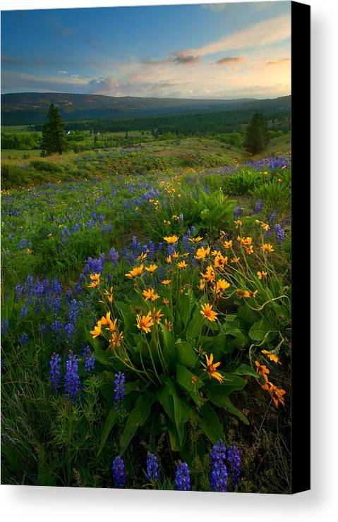 Meadow Canvas Print featuring the photograph Last Light Over The Wenas by Mike Dawson