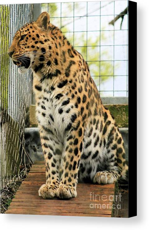 Leopard Canvas Print featuring the photograph Leopard 5 by Ruth Hallam