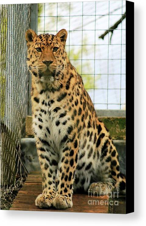 Leopard Canvas Print featuring the photograph Leopard 6 by Ruth Hallam