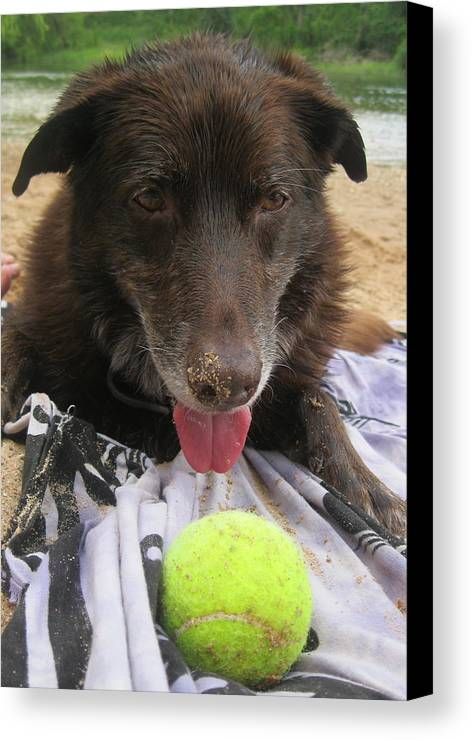 Tennis Ball Canvas Print featuring the photograph Let's Play by Diana Ogaard