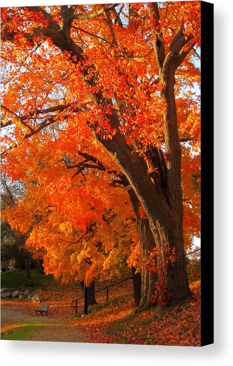 Orange Tree Canvas Print featuring the photograph Orange Tree by Suzanne DeGeorge