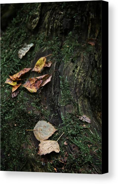 Nature Canvas Print featuring the photograph Swept Away by Odd Jeppesen