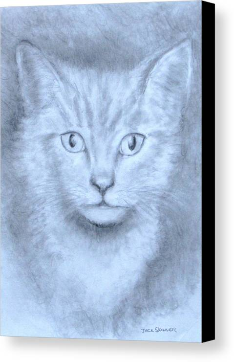 Pencil Drawing Canvas Print featuring the drawing The Kitten by Jack Skinner