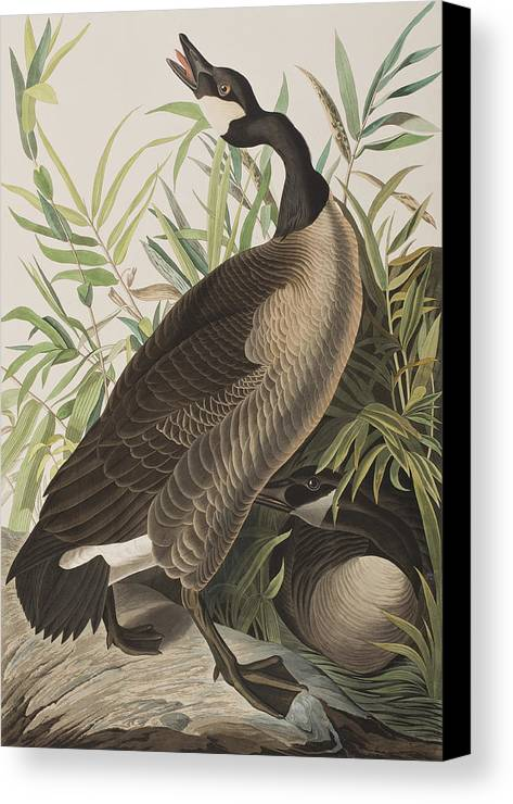 Canada goose picture to canvas for Mystique gardens hookah lounge