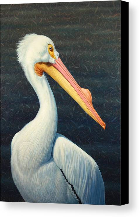 Pelican Canvas Print featuring the painting A Great White American Pelican by James W Johnson
