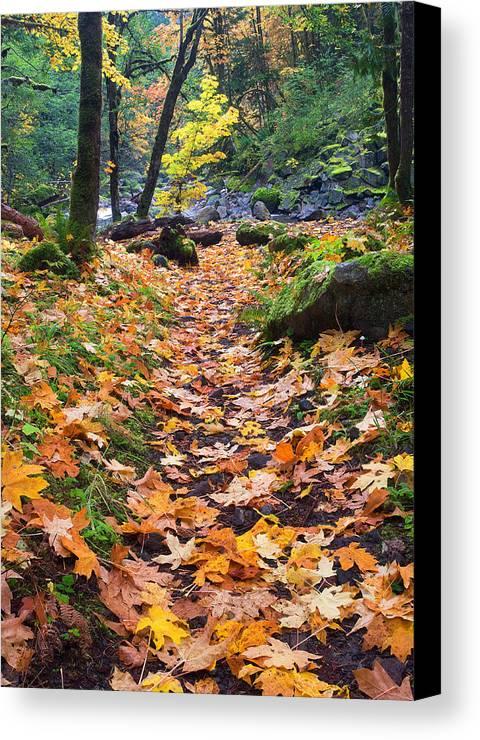 Path Canvas Print featuring the photograph Autumn Path by Mike Dawson