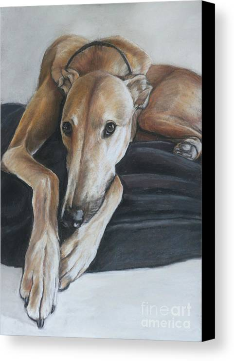 Dog Canvas Print featuring the painting Bauregard by Charlotte Yealey