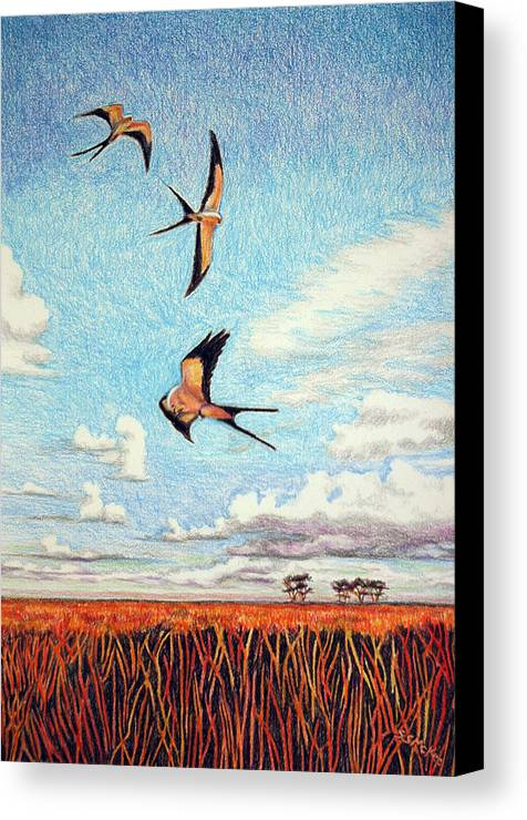 Color Pencil Canvas Print featuring the drawing Bayou Ballet by Suzanne McKee