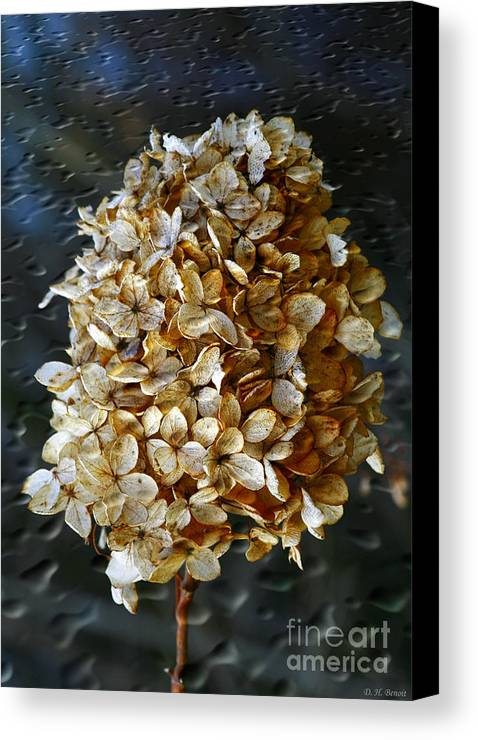 Flower Canvas Print featuring the photograph Beauty Of Old by Deborah Benoit