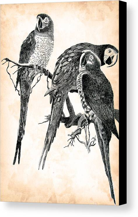 Pen Canvas Print featuring the drawing Birds Of A Feather by Robbi Musser
