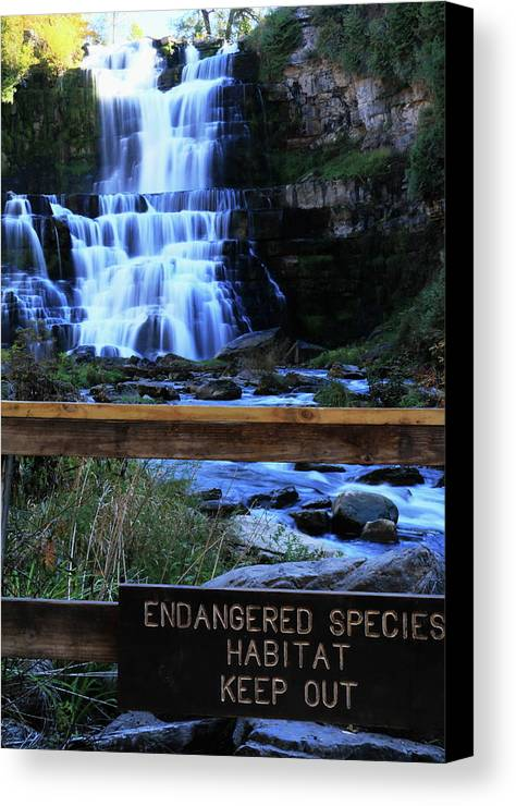 New York Canvas Print featuring the photograph Chittenango Falls State Park by Merle Smith