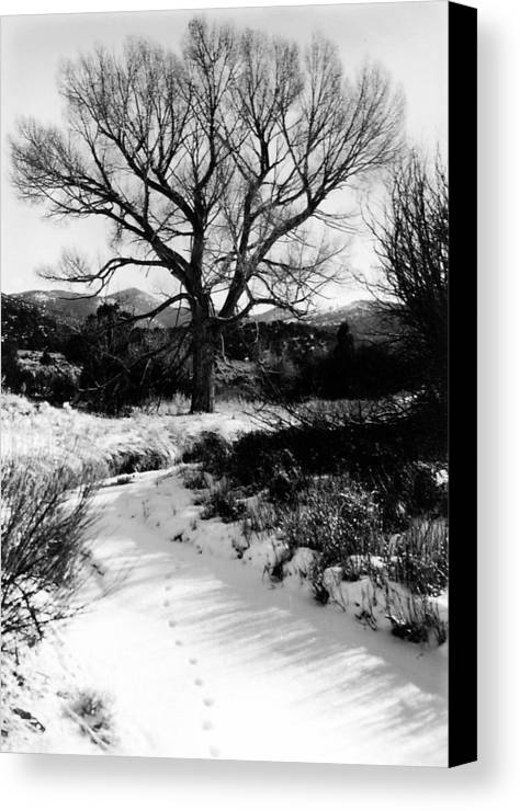 Landscape Canvas Print featuring the photograph Creekside Winter by Allan McConnell