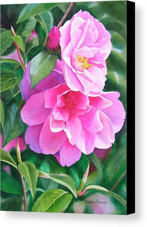 Pink Flower Canvas Print featuring the painting Deep Pink Camellias by Sharon Freeman