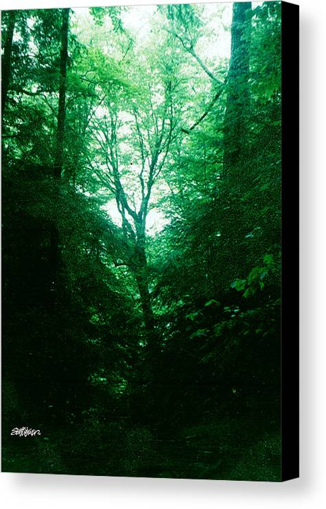 Emerald Canvas Print featuring the photograph Emerald Glade by Seth Weaver