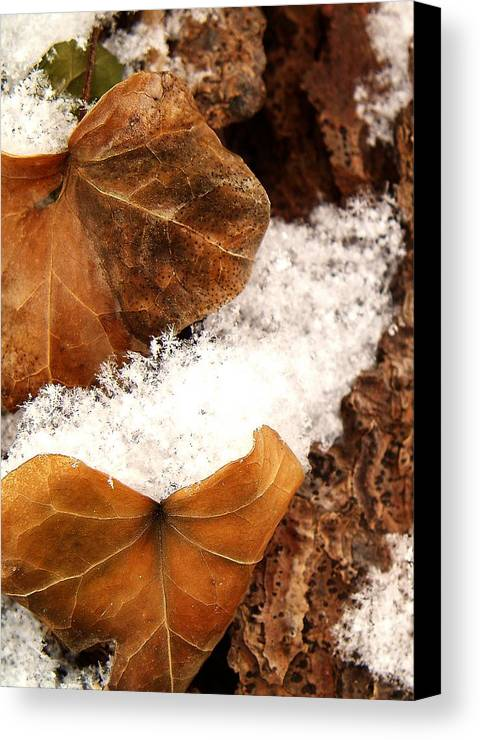 Fall Canvas Print featuring the photograph Fall And Winter by Gaby Swanson
