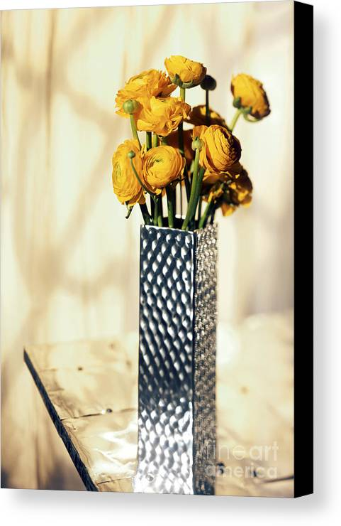 Persian Canvas Print featuring the photograph Persian Buttercup by Tony Cordoza