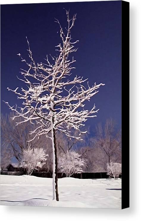 Winter Canvas Print featuring the photograph Snow Tree by Martin Massari