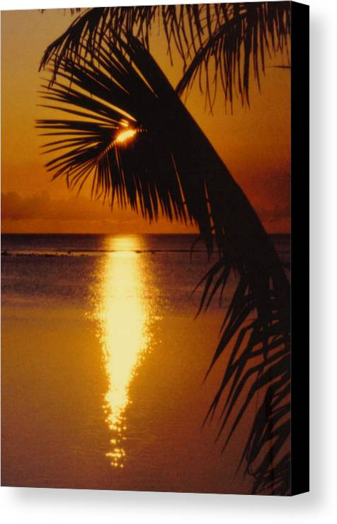 Palm Trees Canvas Print featuring the photograph Tropical Sunset by Dina Holland