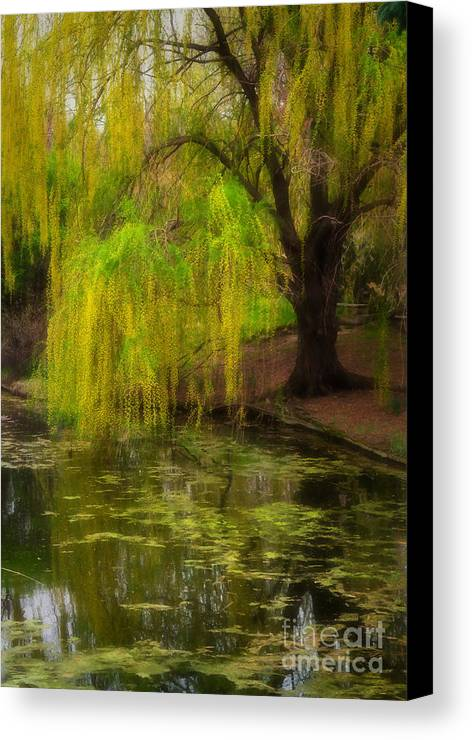 Botanica Canvas Print featuring the photograph Weeping Pond by Fred Lassmann
